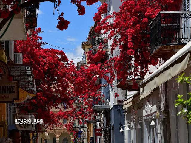Βουκαμβίλιες: Τα συννεφάκια από άνθη που δίνουν χρώμα στο ρομαντικό Ναύπλιο