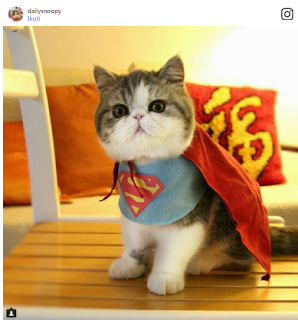 Most Creative Pet Names on Instagram