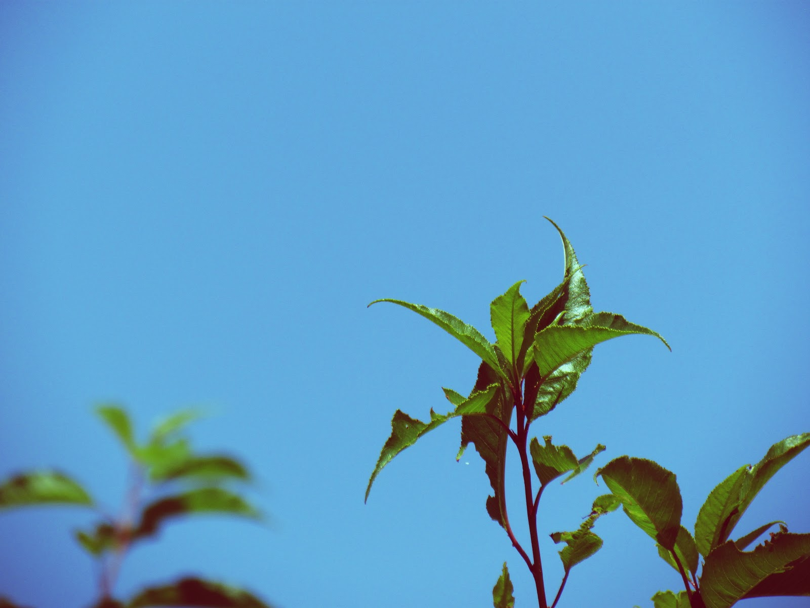A clear day with blue skies and green leaves turning from summer with autumn closing in