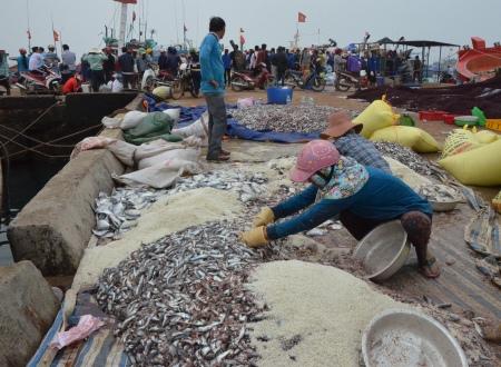 Muối cá nục loại nhỏ vừa chuyển về ngay tại cầu cảng.