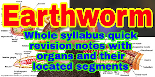 Earthworm, Taxonomic classification, Morphology of earth worms, Anatomy of Earthworm, Digestive system, Reproductive system, Excretory system, Circulatory system, forest of nephridia, Clitellum, earthworm mouth is present in, table of earthworm organs and related segments.