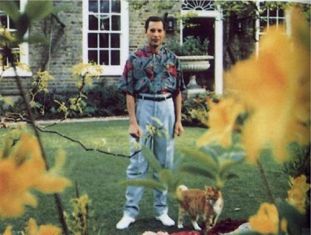 20 Epic Pictures Of Freddie Mercury And His Beautiful Cats