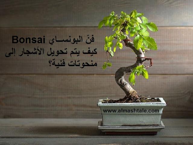 فنّ البونساي bonsai