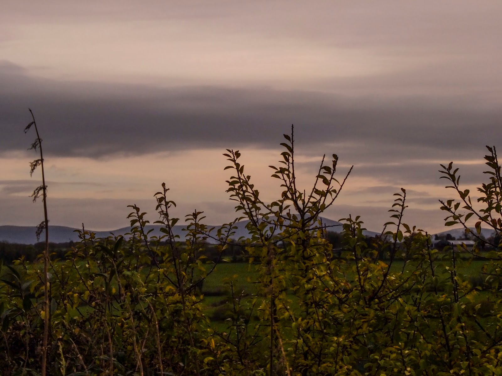 Sunset over the mountains behind a willow hedge.