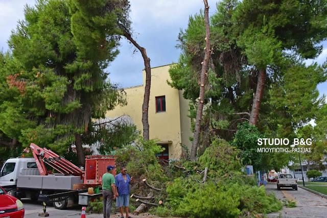 Εκτεταμένο κλάδεμα επικίνδυνων δέντρων στο 3ο Δημοτικό Σχολείο Ναυπλίου
