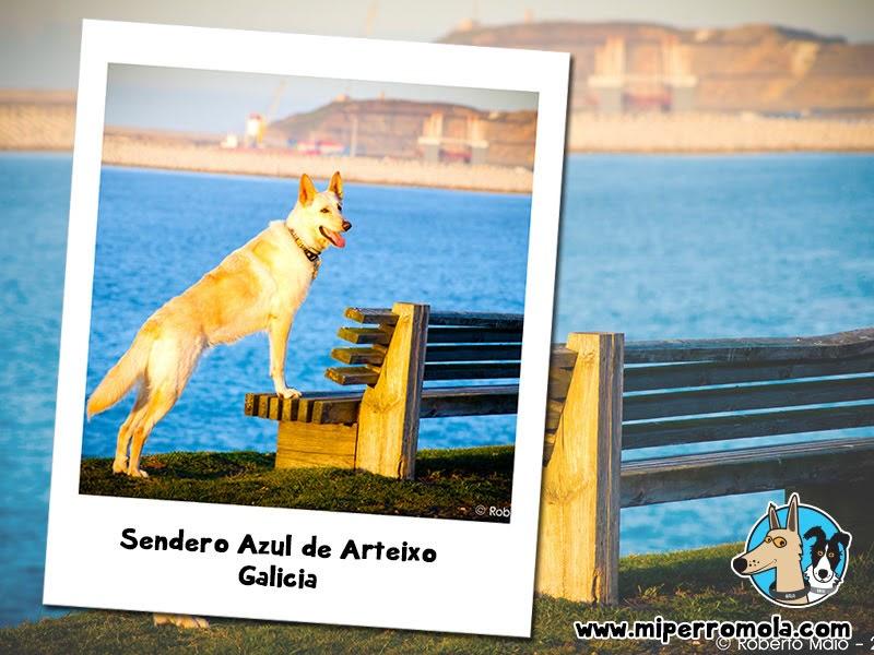Can de Palleiro en el Sendero Azul de Arteixo