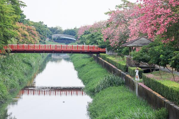 彰化北斗美人樹綿延1.5公里河濱自行車道,河濱公園景觀橋好好拍