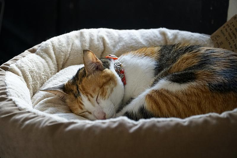 Cat House Basket