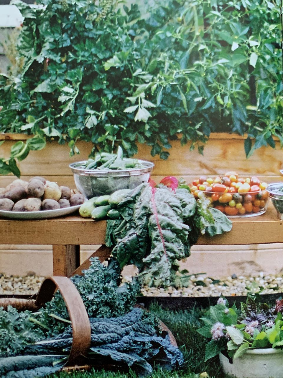 Kitchen Garden Revival Book shares garden crop