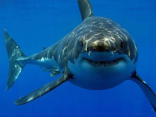 معنى حلم مهاجمة سمك القرش