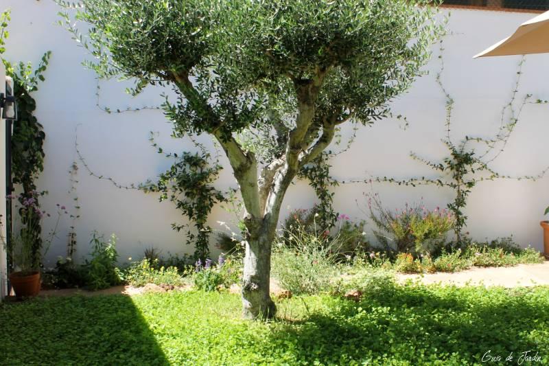 mi jardín ahora