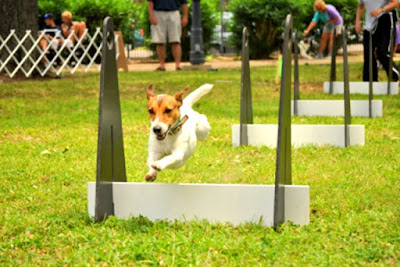 A Bark in the Park at Kempner Park in Galveston, Texas, Features Friendly Canine Competition for Dogs
