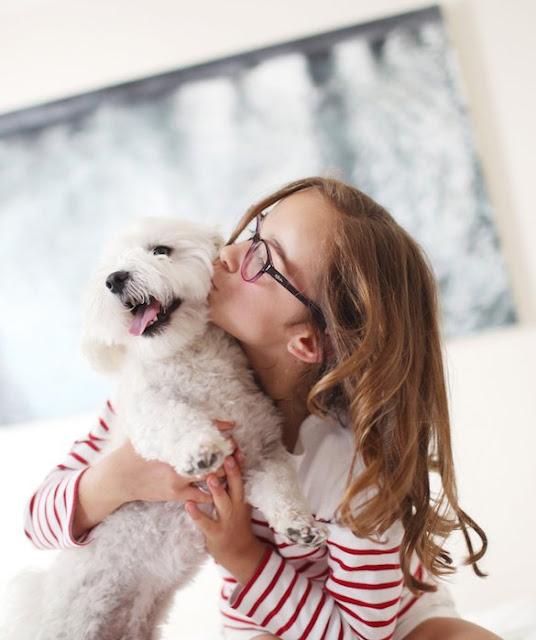 5 coisas importantes que todo dono deve saber sobre os seus pets