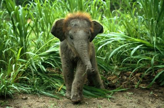 हाथी का बच्चा