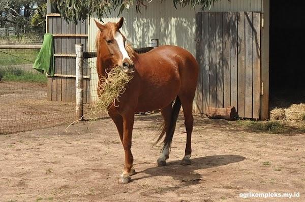 Klasifikasi Pemberian Pakan Kuda Berdasarkan Tingkatannya