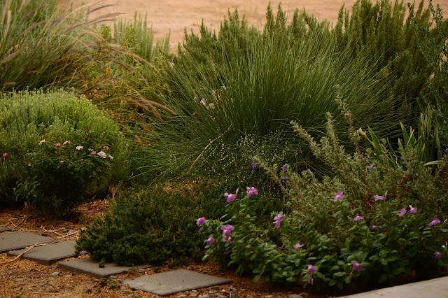 tuesday view, small sunny garden, desert garden, amy myers, photography,
