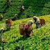 தோட்டத் தொழிலாளர்களின் சம்பளத்தை 1000 ரூபாயாக அதிகரிக்க அமைச்சரவை அனுமதி