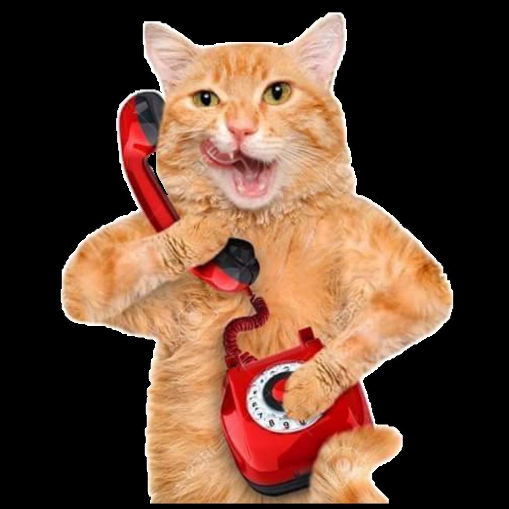 render gato llamando por teléfono