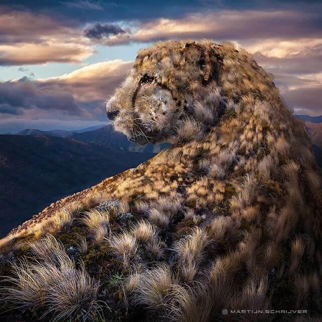 03-Cheetah-Landscape-Digital-Art-Martijn-Schrijver-www-designstack-co