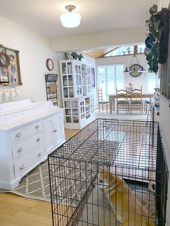 View of kitchen with sideboard and dog in crate.