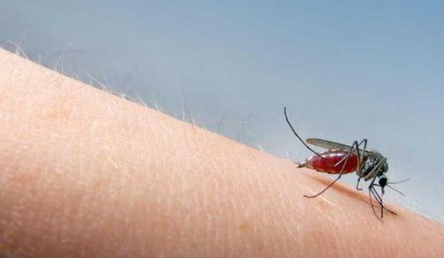 Cara Mengobati Penyakit Chikungunya