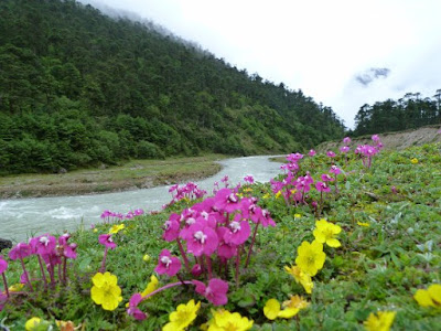Flowers in Yumthang Valley