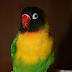 Mengobati Burung Yang Kena Snot