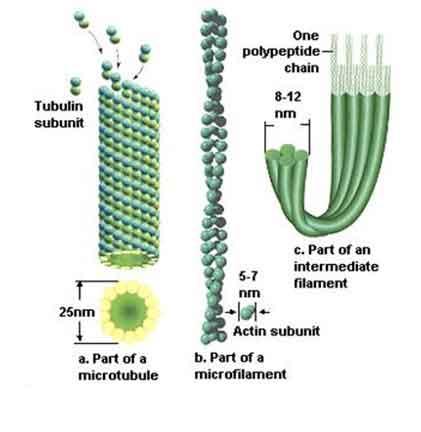 Apa fungsi flagel dalam sel hewan?