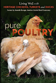 Pure Poultry, Living Well with Heritage Chickens, Turkeys and Ducks by Victoria Redhed Miller