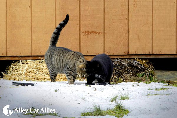 winter weather tips for outdoor cats