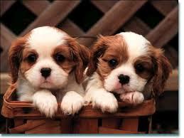 Köpeğinize Zarar Verebilecek Ev Ürünleri