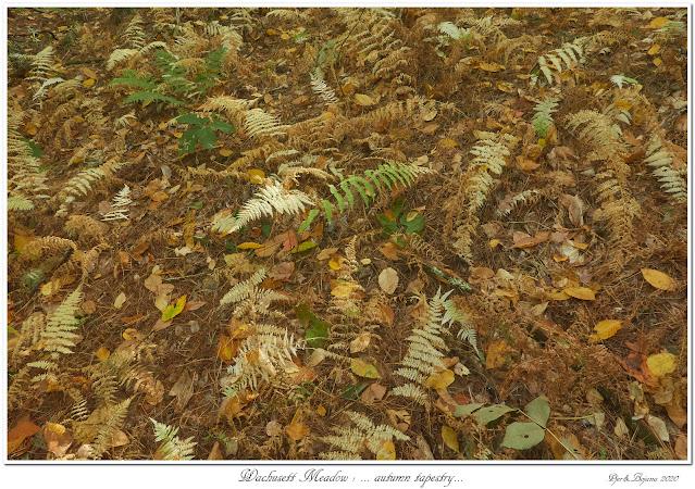 Wachusett Meadow: ... autumn tapestry...
