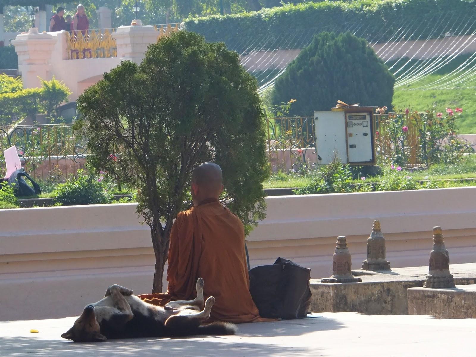 монах буддист медитирует с собакой