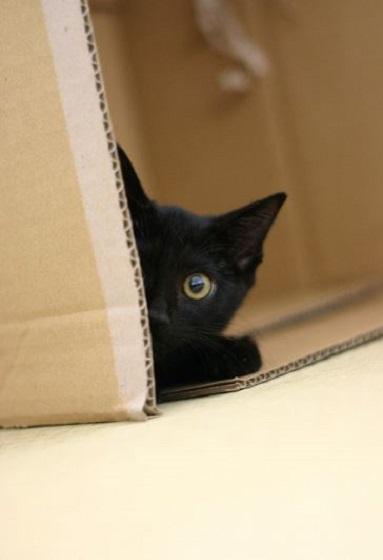 carton et chat 24