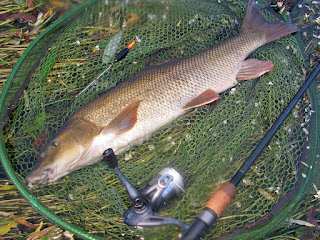 An 8lb-plus barbel landed on float tackle, trotting a pellet beneath a stick float