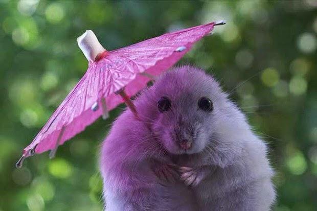 Top Blog da Adilene: Vejam imagens dos animais mais fofos do mundo CT37