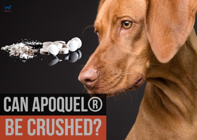 can-apoquel-be-crushed