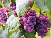 Kawasan Penghasil Anggur Terbaik, dari yang Klasik Hingga Modern