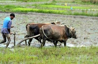 jharkhand-government-will-asses-the-damage-of-the-crop-due-to-the-low-rainfall