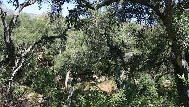 O que ver/fazer no Santa Bárbara Botanic Garden