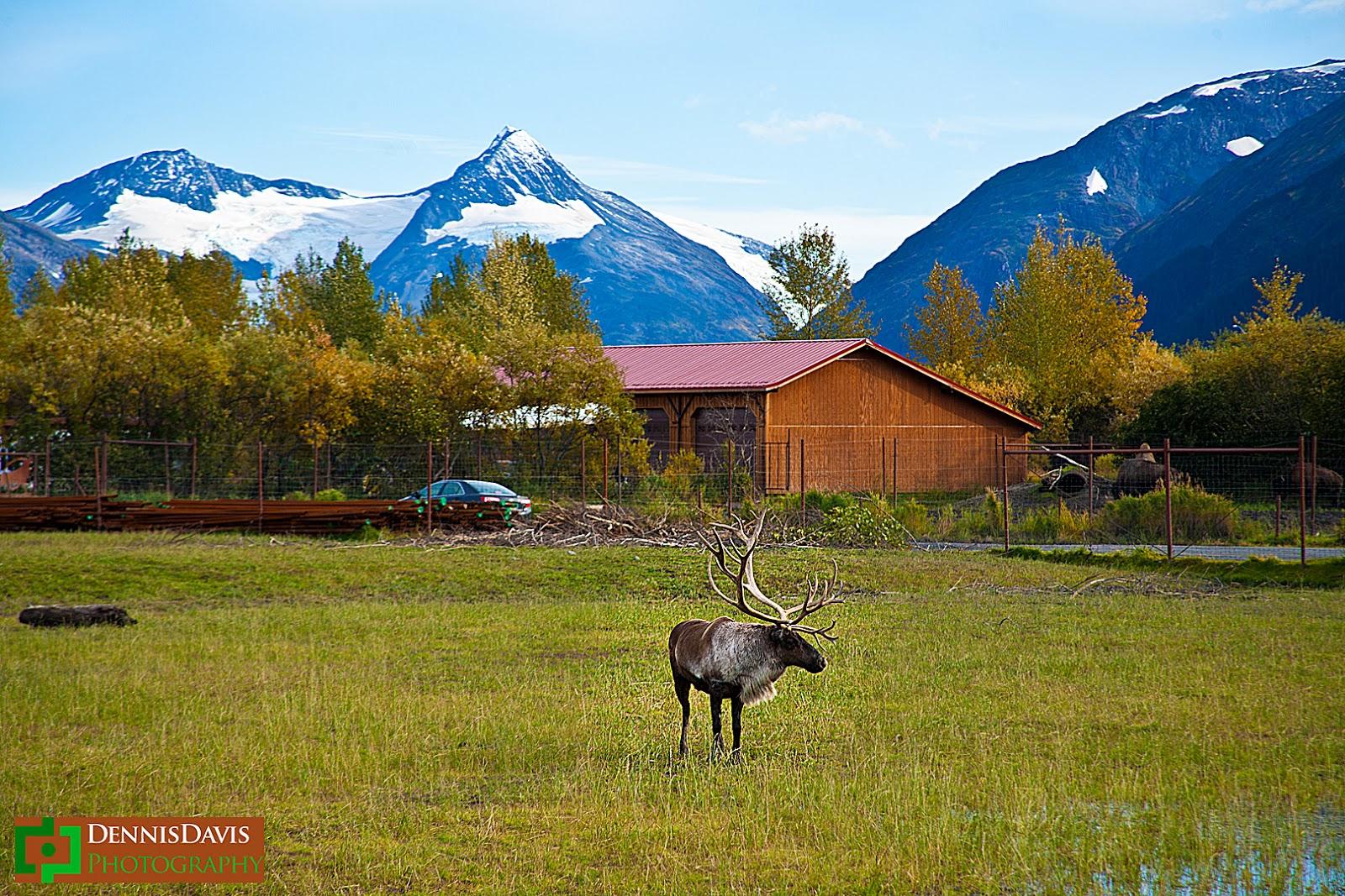 Alaska Dream Home - elk_alaska_Beautiful Alaska Dream Home - elk_alaska  Snapshot_853856.jpg