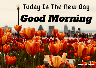 Best Good Morning HD Images, Wishes, Status HD Wallpaper