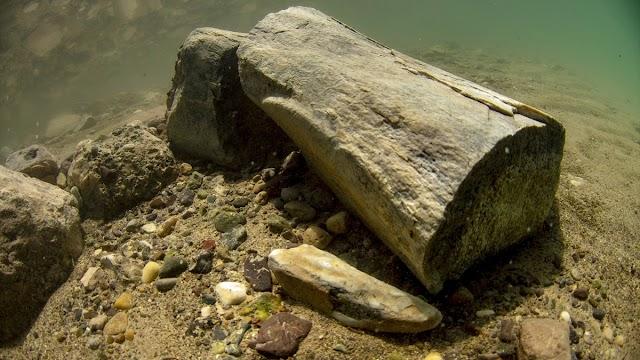 Fillerin atasının 7,5 milyon yıllık fosili su altında görüntülendi