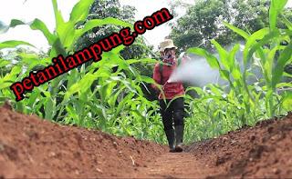 http://www.petanilampung.com/2016/11/cara-mencangkok-tanaman-pepaya-dengan.html#more