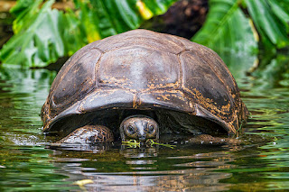 Why Turtles Live In Water African Folktale