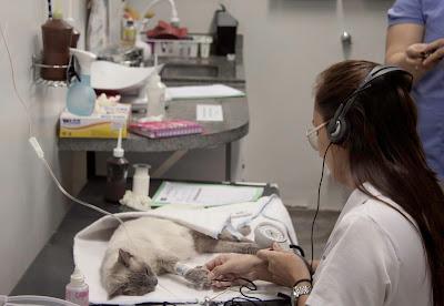 6 especialidades veterinárias que você não sabe que existem