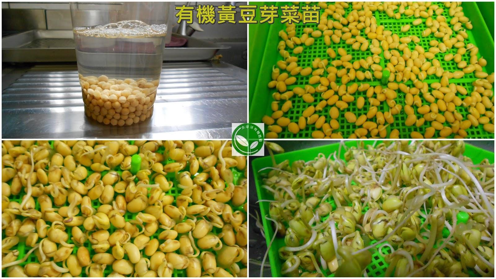 黃豆,有機黃豆,台灣黃豆,涼拌黃豆芽,如何孵黃豆芽,種黃豆芽,可催芽黃豆,有機可催芽黃豆,黃豆催芽,黃豆食譜