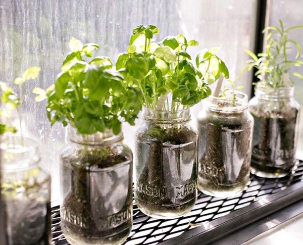 mini-horta-no-vidro-reciclado-abrirjanela