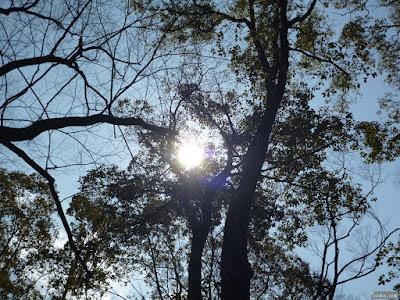 大阪城の森から太陽