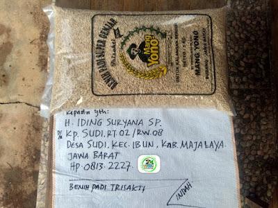 Benih padi yang dibeli   H. IDING SURYANA Majalaya, Jabar.    (Sebelum packing karung).